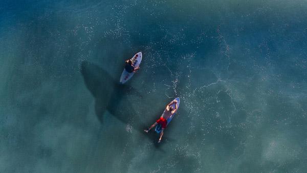 image de deux surfeurs sur leurs planches avec l'ombre d'un requin un danger connu du surf